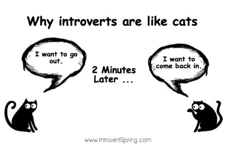 introverts cats
