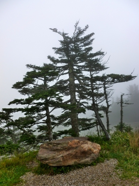 Misty morning at Mt. Mitchell